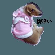 可愛臘腸狗短腿狗