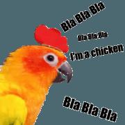 何この鳥!プゥジープゥ