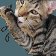 トラ猫のグウェングウェンさん【写真版】