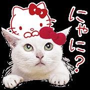 Anago×凱蒂貓