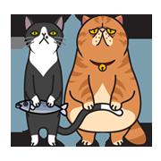貓咪的日常