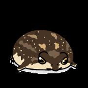 カエルな日々:アメフクラガエルさん