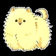 黄色い毛玉のポメラニアン